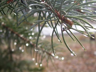 20101231_pine1