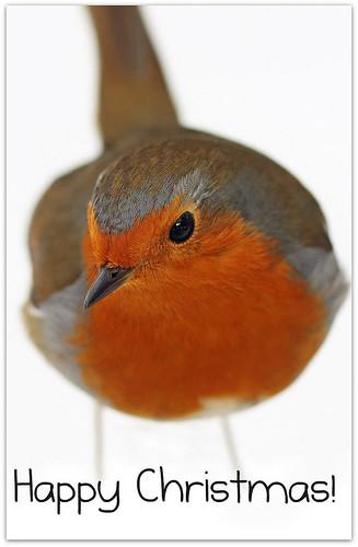 Robin + snow =