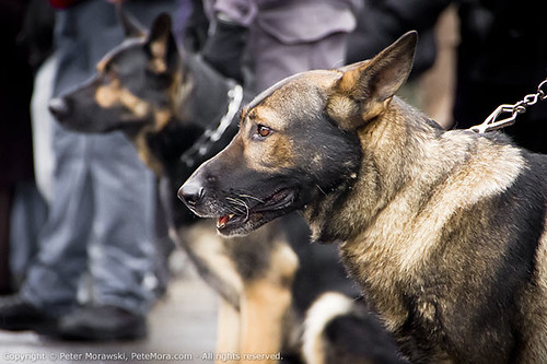 Ryan Russell Funeral Procession: Police Dogs