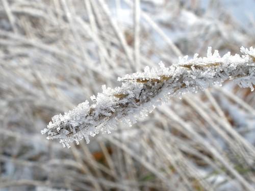 Ice Crystal I