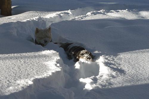 Head deep in snow