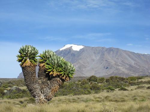 Kilimanjaro 075