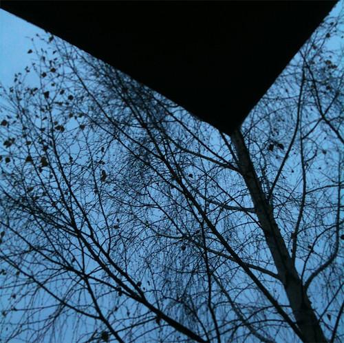 split tree