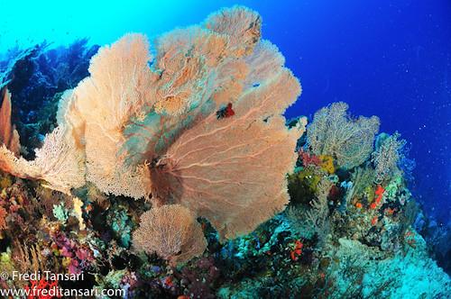 [www.portraitofindonesia.com]DSC_2326