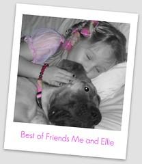 Josie and Ellie the Great Dane