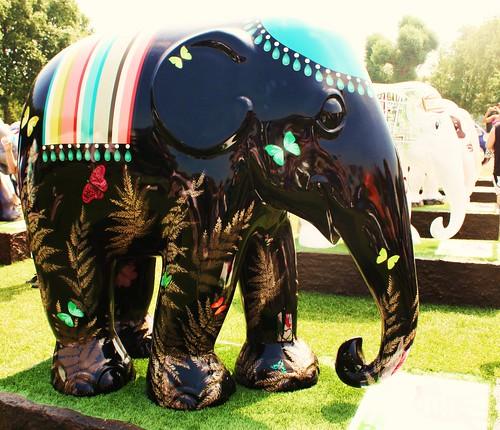 Elephant Farfalla