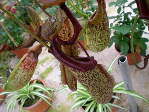 Cameron flora 5