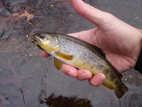 Winter Fly Fishing For Gunpowder Trout