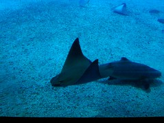 夜探海生館:大洋池的魟魚