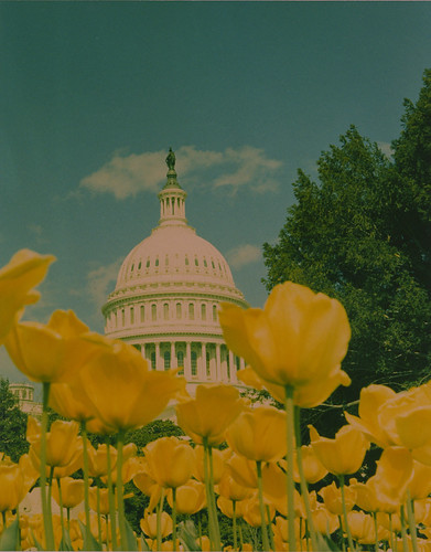 Capitol, with tulips, from 1952