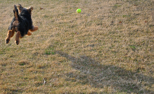 Lizzie chasing a ball