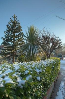 Snow Palm HDR