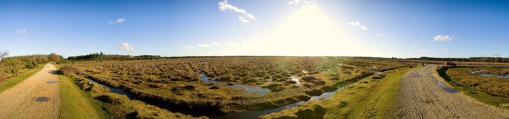 The New Forest in the sun (click to enlarge)