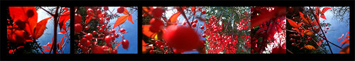 NYE Panel_redtree_1_blkbg