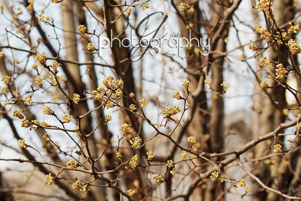 Mar212011_0017 copy