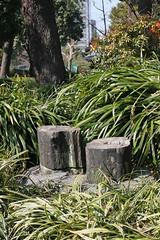 日比谷公園(松石)