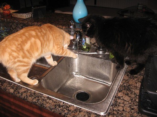 cats at the faucet