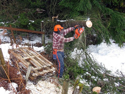Clearing the snow-damaged tree