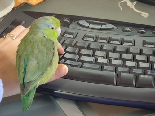 Birder, my female parrotlet