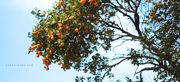 Kum-tree2