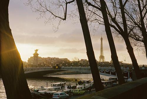 Eiffel through the Trees
