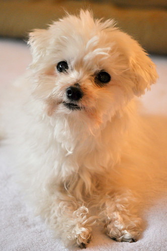 13 year-old puppy