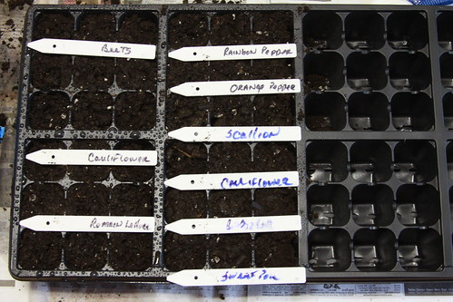 First Round of Seeds