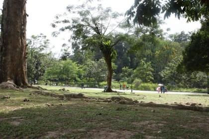 botanic gardens during CNY