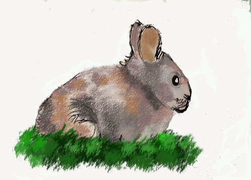 Rabbit - colored with Photoshop