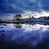 puddle reflecting tree by houstonryan