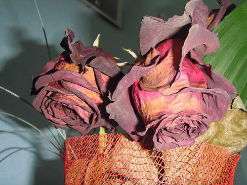 Rose ormai appassite