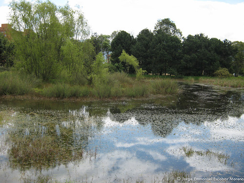 Humedal El Salitre