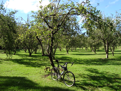 George Rannill Park - What's left of Clemow's Orchards