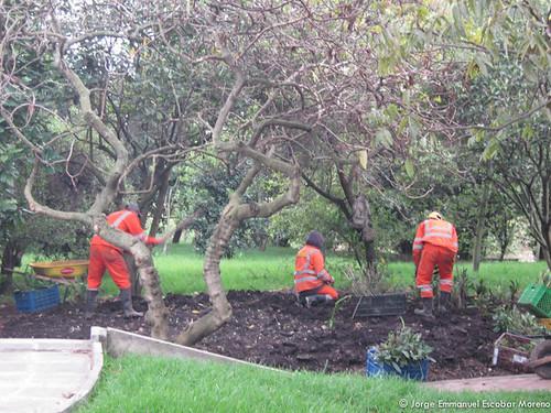Plantación en el Humedal Santa María del Lago
