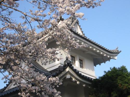 sakura at front gate, sonobe hs