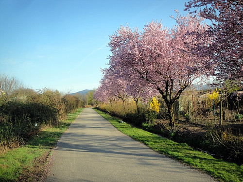 freiburger path.