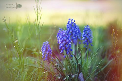 Spring Again by aithom2