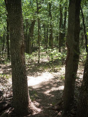 Johnson Branch tree gate (notice handlebar rub marks on bark)