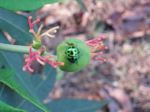 201102040435_green-bug