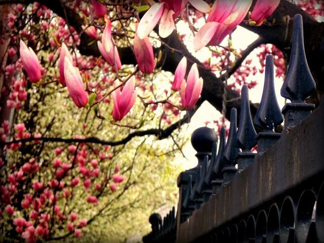 hff!!! magnolia edition!