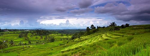 Panorama of rice terrace in Jatiluwih