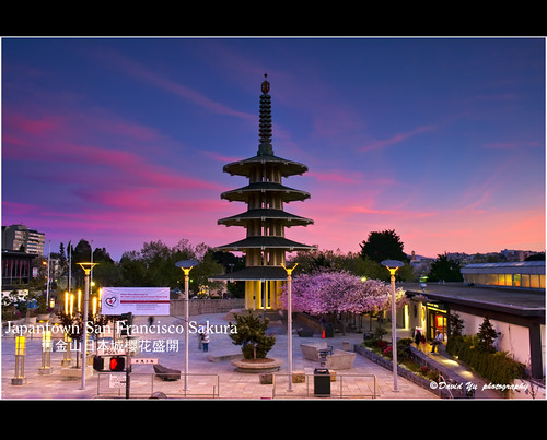 Japantown San Francisco Cherry Blossom Sakura 樱花盛開