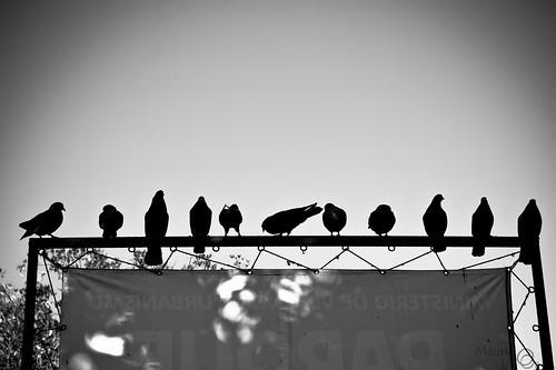 Line Up!.