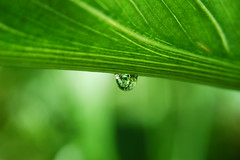 waterdroplet