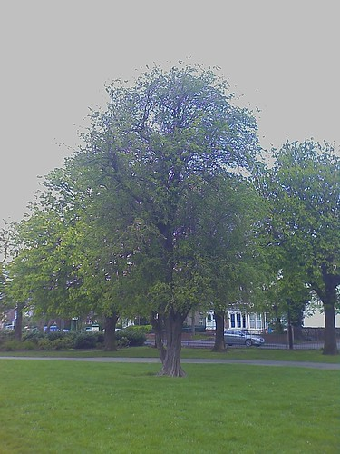Message Tree, Albert Park, Middlesbrough