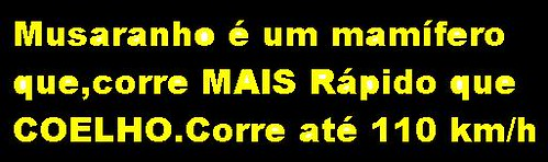 LetrasSobreMusaranho