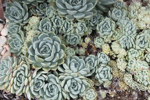 New York Botanical Gardens - Succulents 1