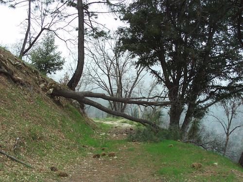 Fallen Tree-2