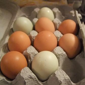 Neal's eggs