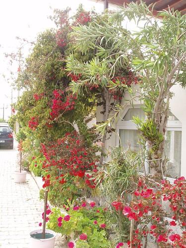 201105010087_colourful-garden